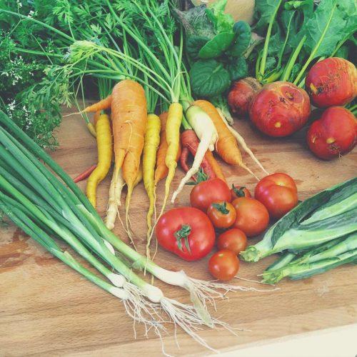 Harvest from my little Seattle garden.